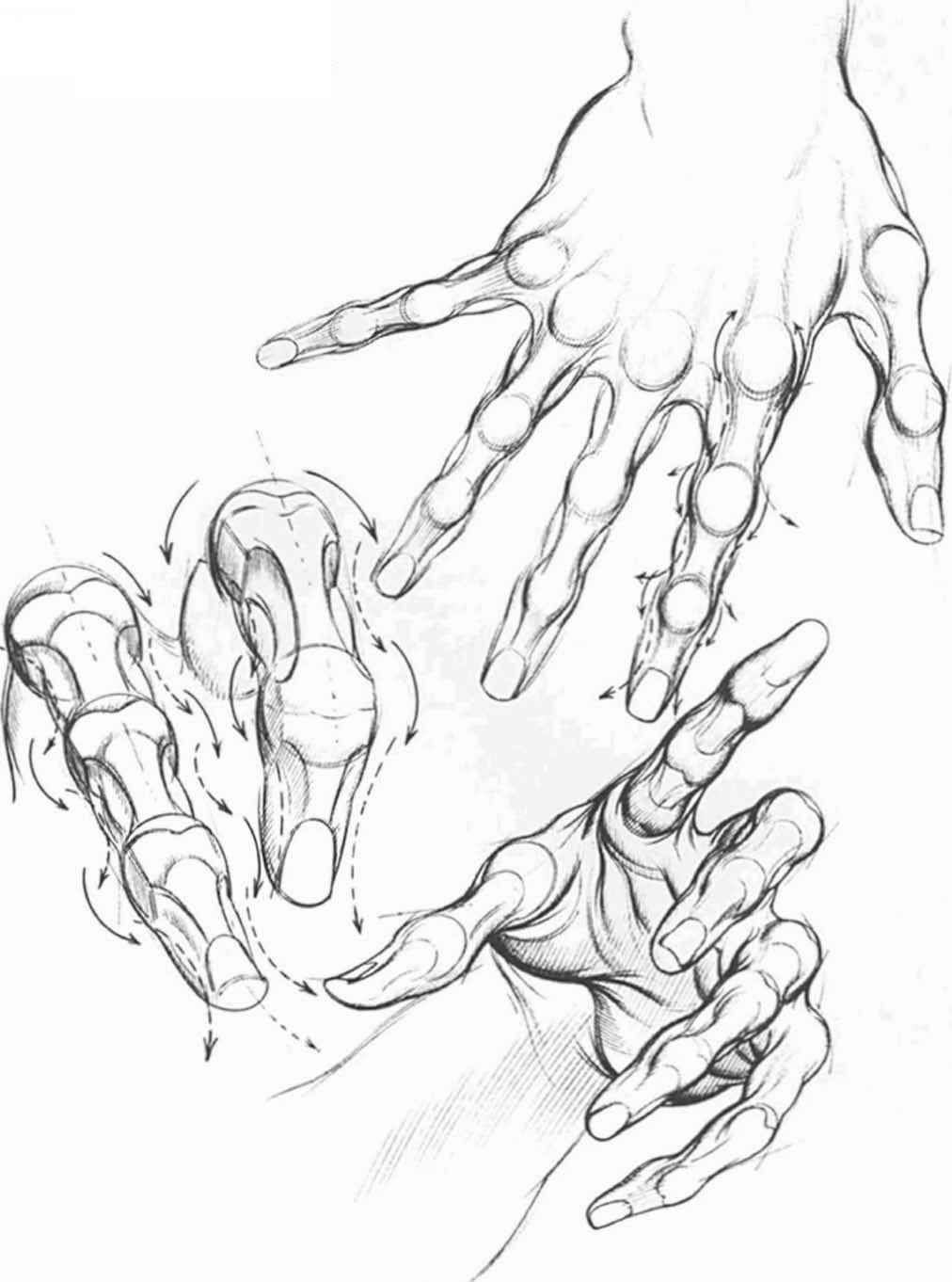 1012x1362 Human Muscle Drawings Comics Hand Research Muscles