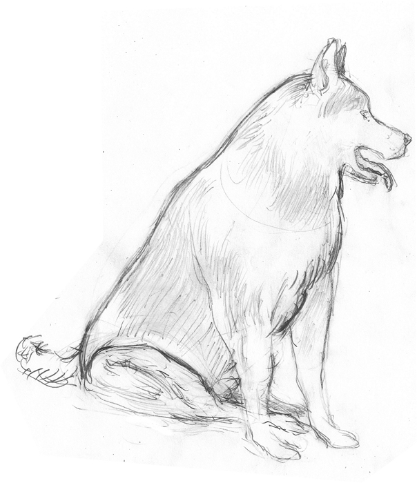 604x700 Jed Alexander Some Husky Drawings, Research And Character You