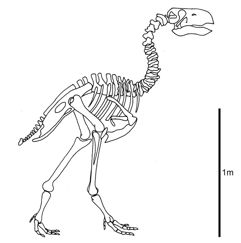 1417x1429 Suggests Terror Bird's Beak Was Worse Than Its Bite