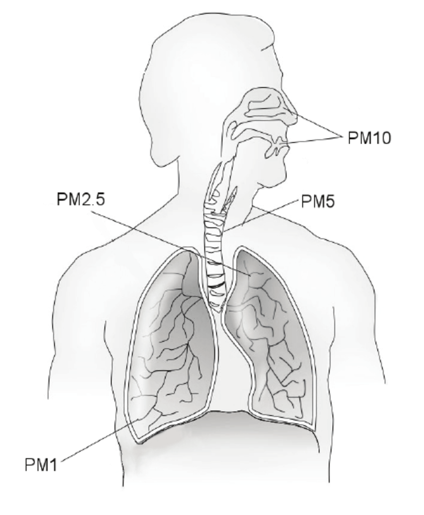 850x1032 Pm Deposition In Respiratory System. Major Conduit