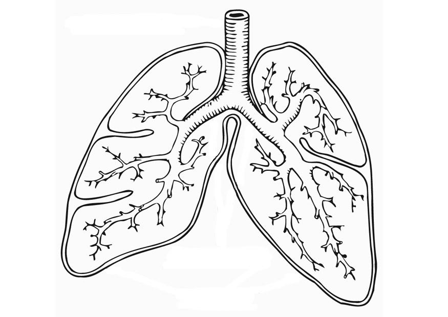 875x620 Coloring Page Respiratory System