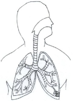 Respiratory system with label drawing at getdrawings free for 250x334 learn the parts of the respiratory system bathroom ideas ccuart Image collections