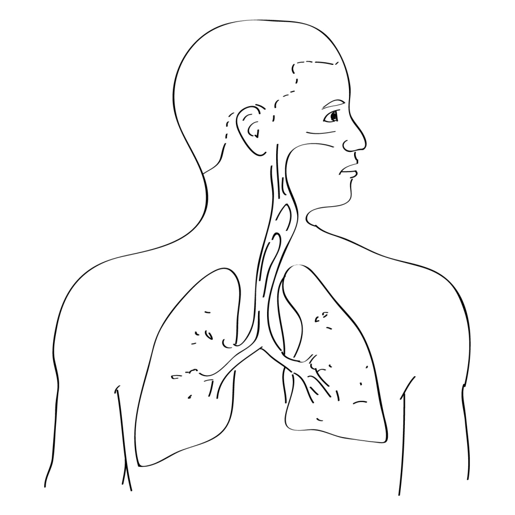 Respiratory System With Label Drawing at GetDrawings.com | Free for ...