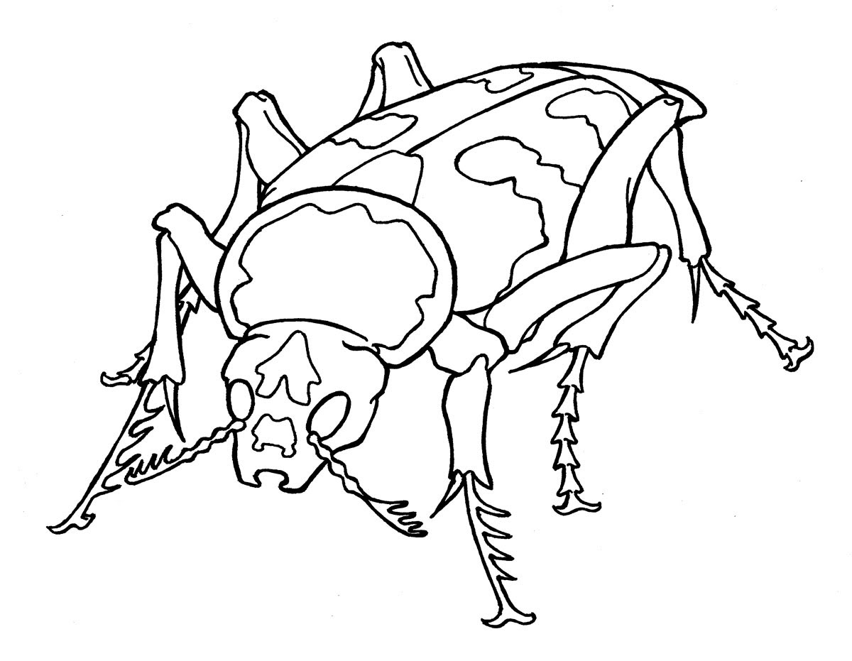 rhinoceros beetle coloring pages - photo#5
