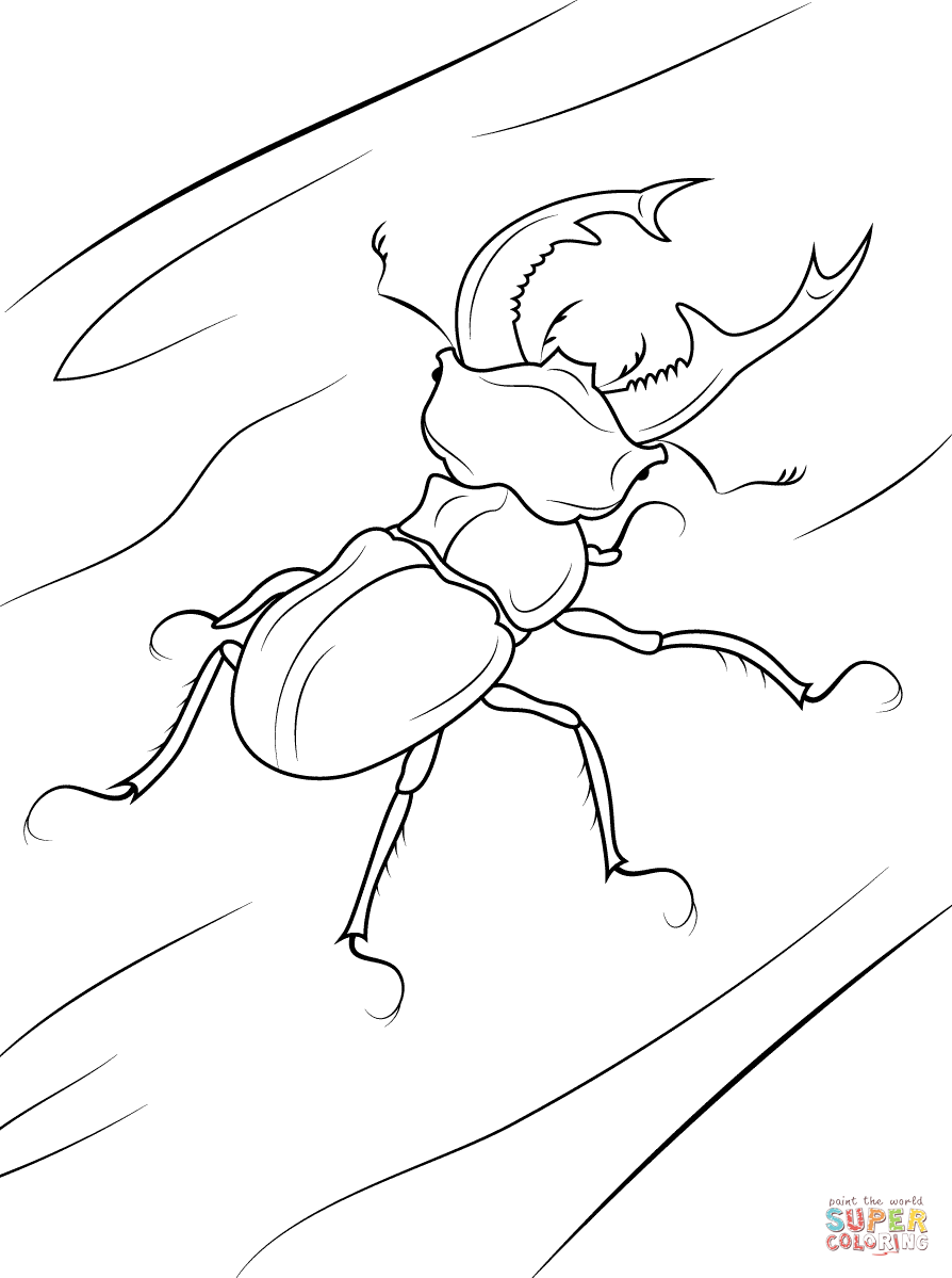 rhinoceros beetle coloring pages - photo#8