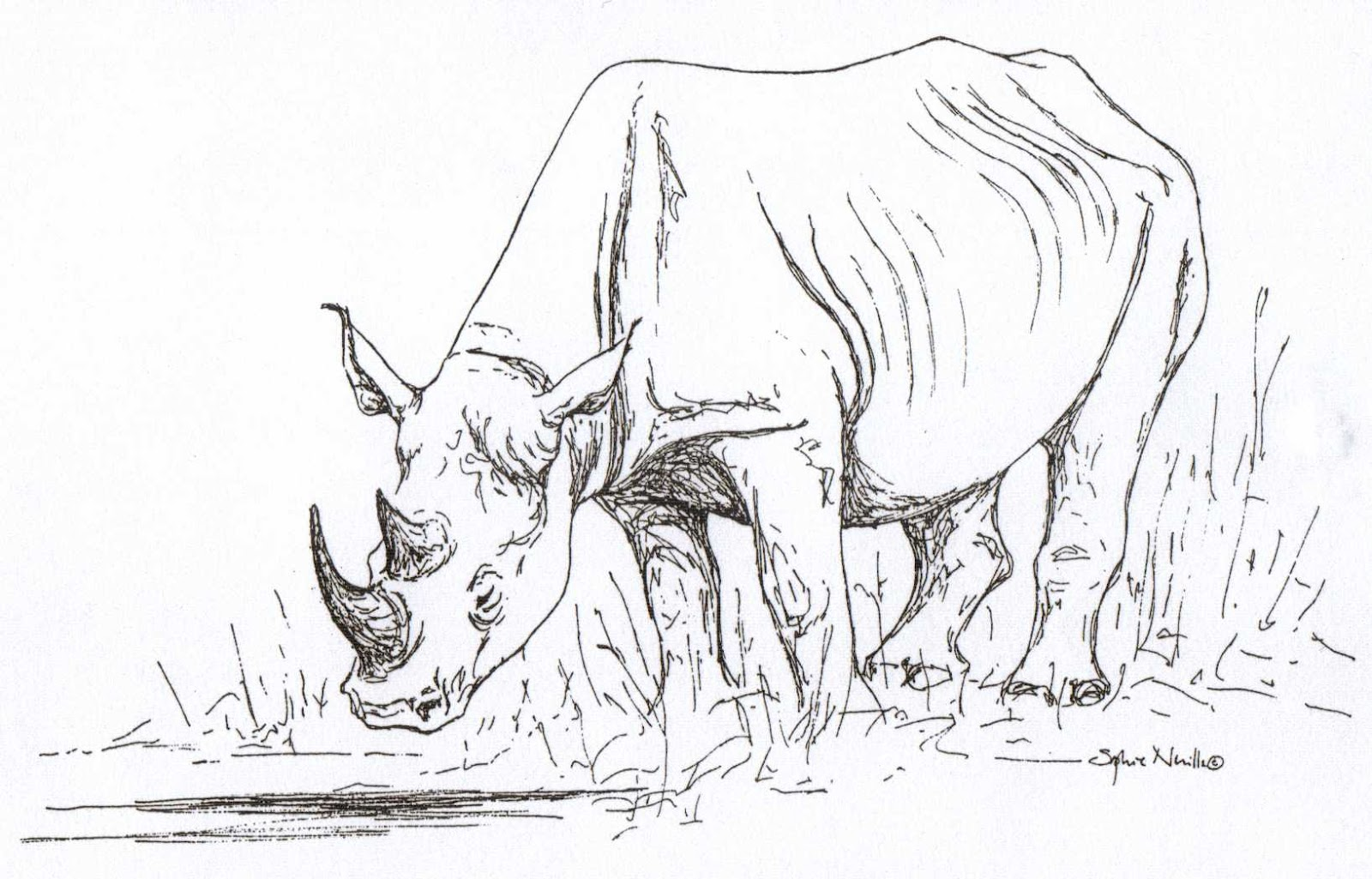 1600x1025 Ride The Wings Of Morning Drawing Rhinos ~