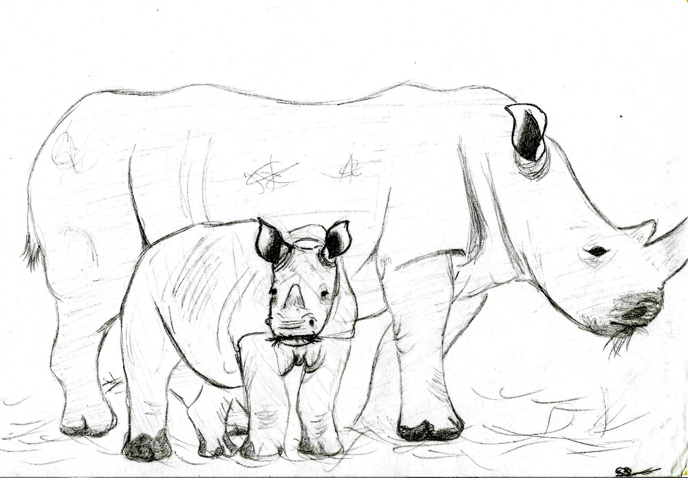 1000x695 White Rhino Mother And Calf Sketch By Thylacinus1