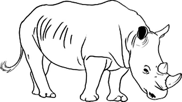 Rhino Drawing at GetDrawings.com | Free for personal use ...