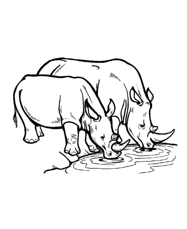 600x734 Rhino Standing On Tall Grass Coloring Pages Batch