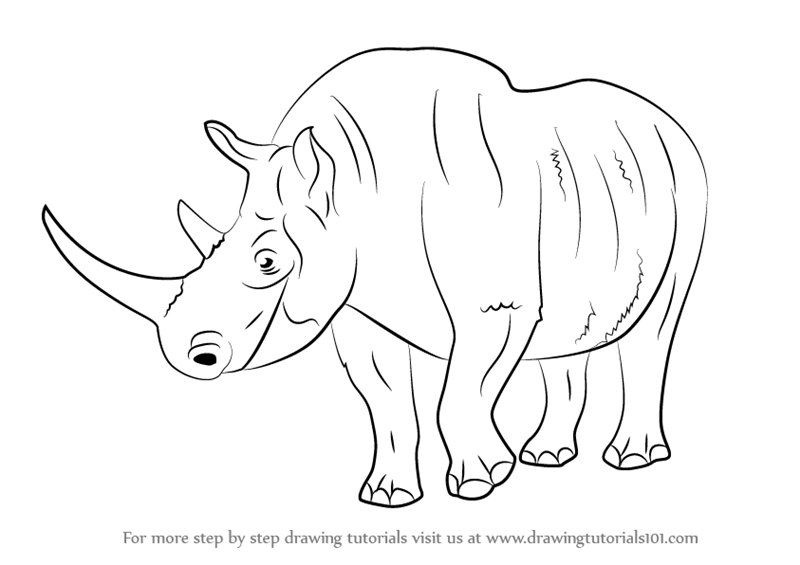 800x565 Learn How To Draw A Woolly Rhinoceros (Extinct Animals) Step By