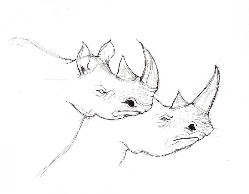 804x628 Drawn Rhino Rhino Head