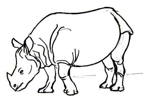 580x410 How To Draw A Rhinoceros