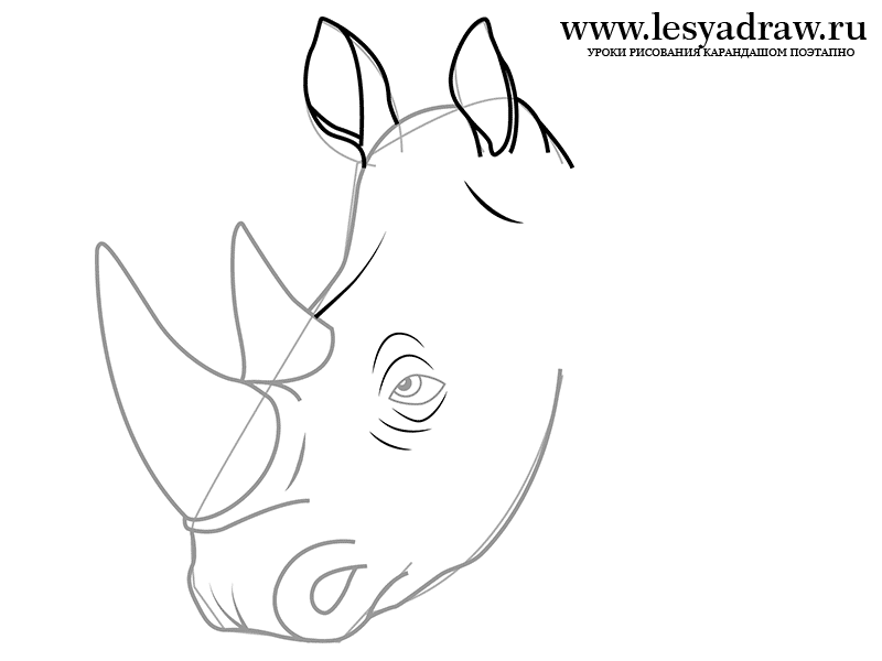 800x600 How To Draw A Rhinoceros With A Pencil Step By Step