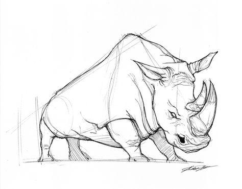 474x370 Image Result For Rhinoceros Donka Rhino Rhinoceros