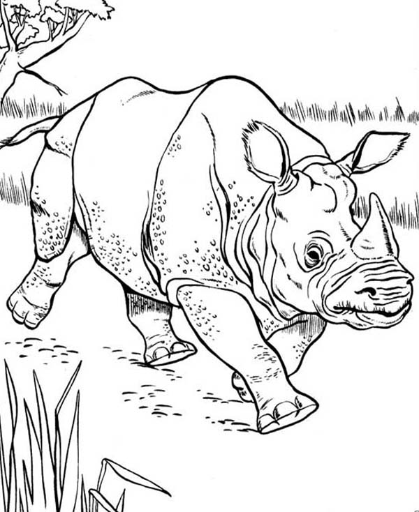 600x734 Rhino Coloring Pages