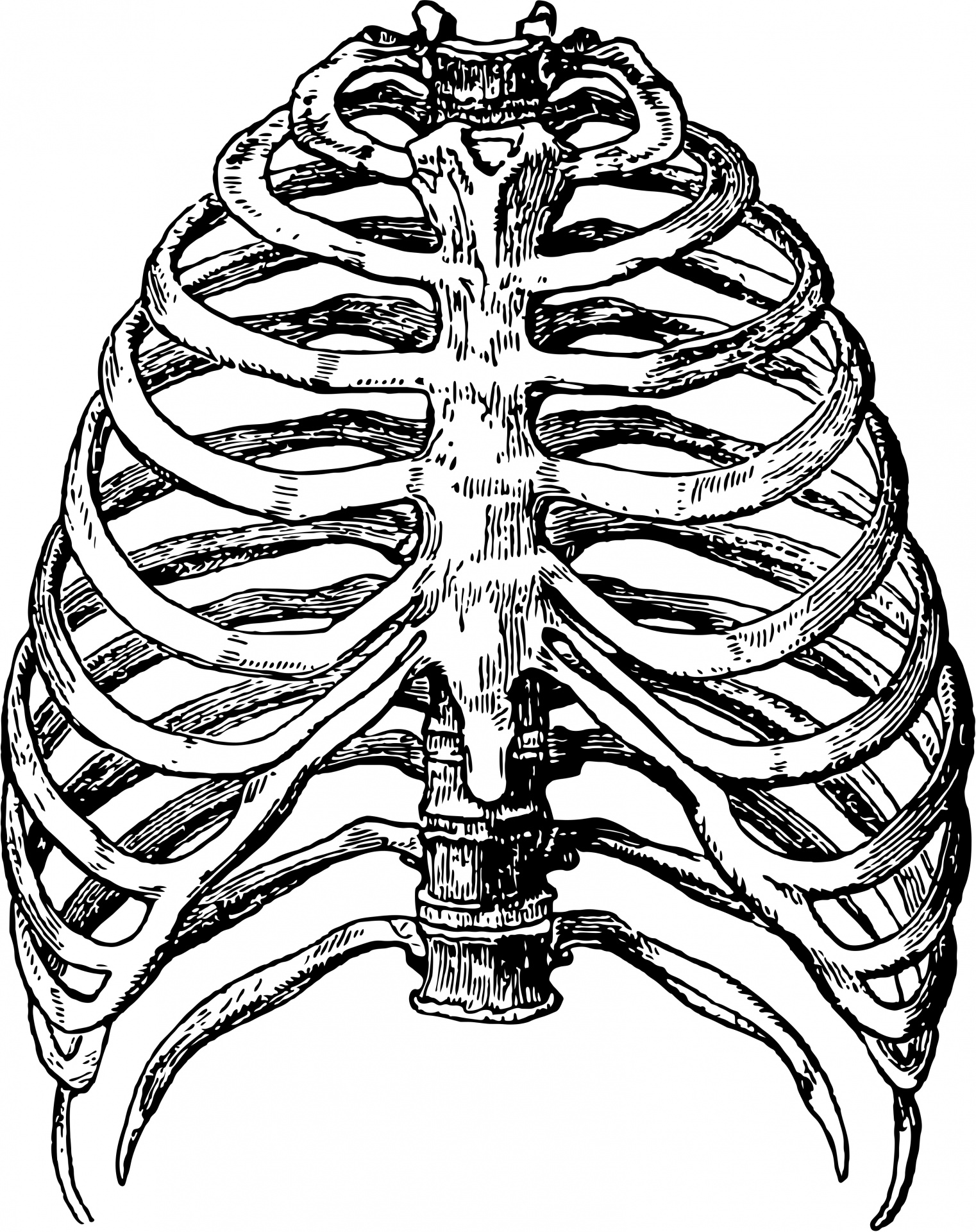 1522x1920 Rib Cage Clipart Black And White