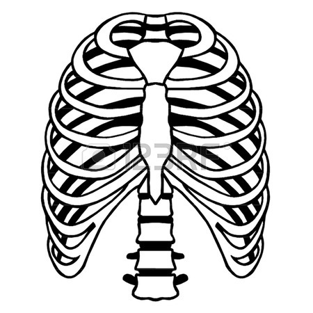 450x450 Rib Cage Stock Photos. Royalty Free Business Images