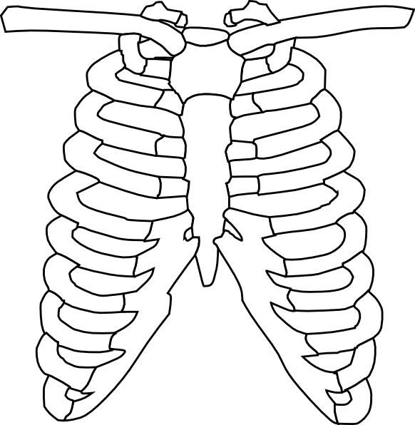 582x596 Rib Cage Clip Art Free Vector In Open Office Drawing Svg ( Svg
