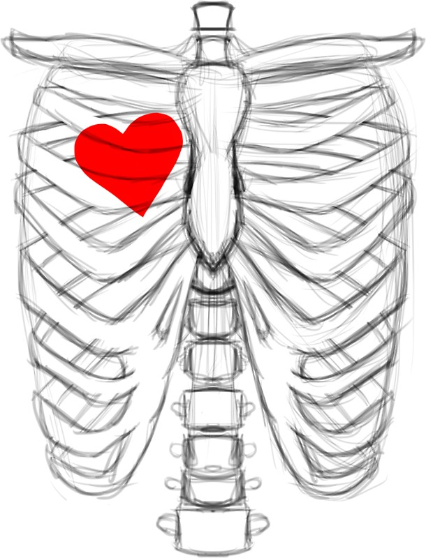 610x800 Rib Cage Sketch With Heart On The Right Side Stickers By