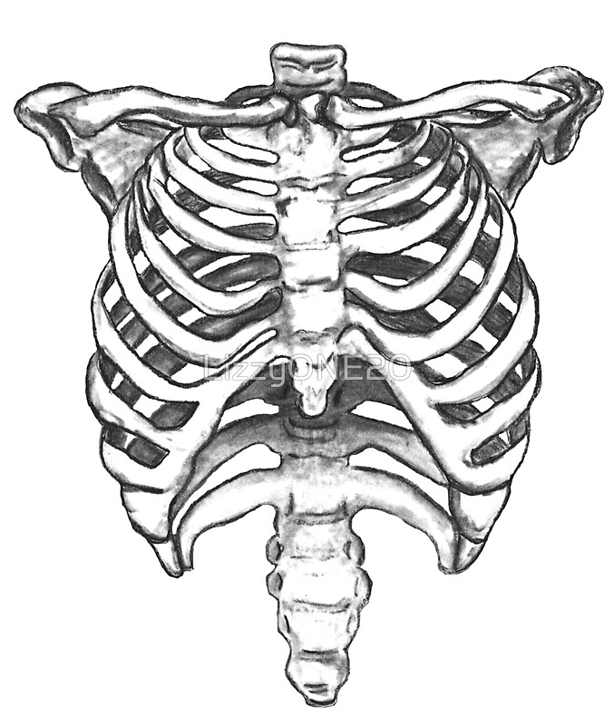 666x800 Skeleton Ribcage By Lizzyone20 Stickers Skeletons