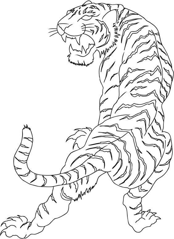 564x774 The Best Rib Cage Drawing Ideas On Rib Cage, Rib