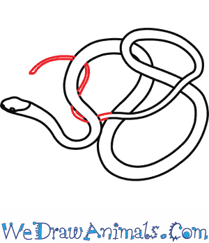 300x350 How To Draw An Eastern Ribbon Snake