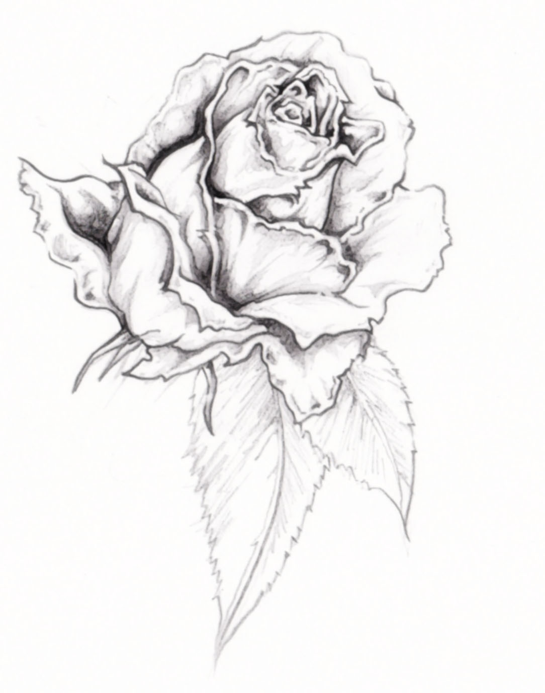 1084x1376 Collection Of Free Banner And Rose Tattoo Design