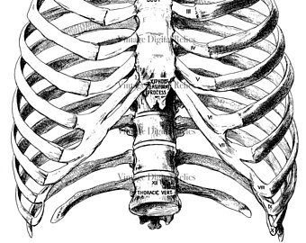 340x270 Medical Drawing Etsy