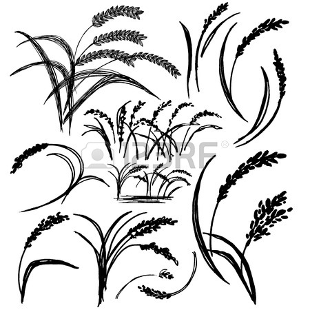 450x450 2,512 Rice Sketch Stock Vector Illustration And Royalty Free Rice