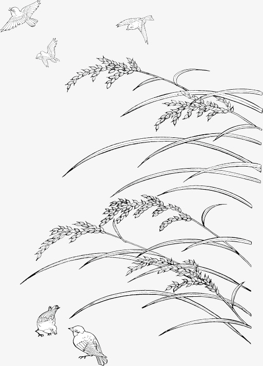 513x714 Rice And Sparrows Line Drawing Vector Material, Rice, Plant, Crop