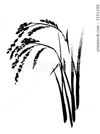 335x450 Ear Of Rice, Paddy, Rice Plant