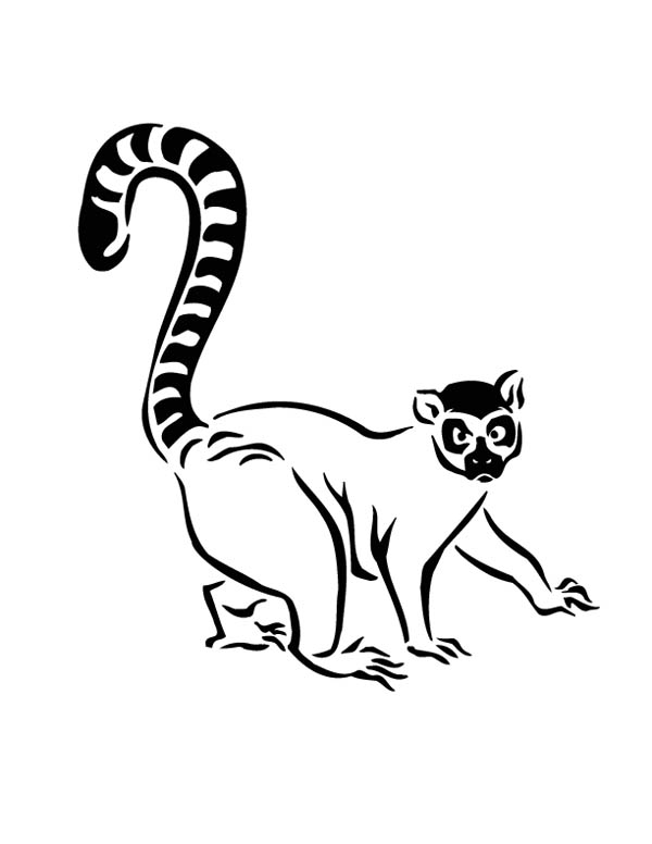 Ring tailed lemur drawing at free for for Ring tailed lemur coloring pages