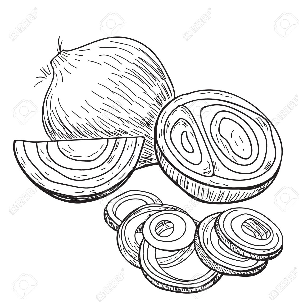 1300x1300 Onion Hand Drawn Vector. Full, Rings And Half Cutout Slice
