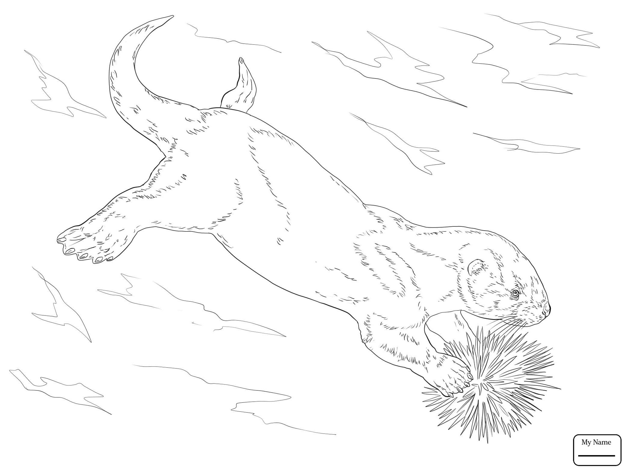 River Otter Drawing at GetDrawings.com | Free for personal use River ...