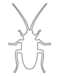 Roach Drawing
