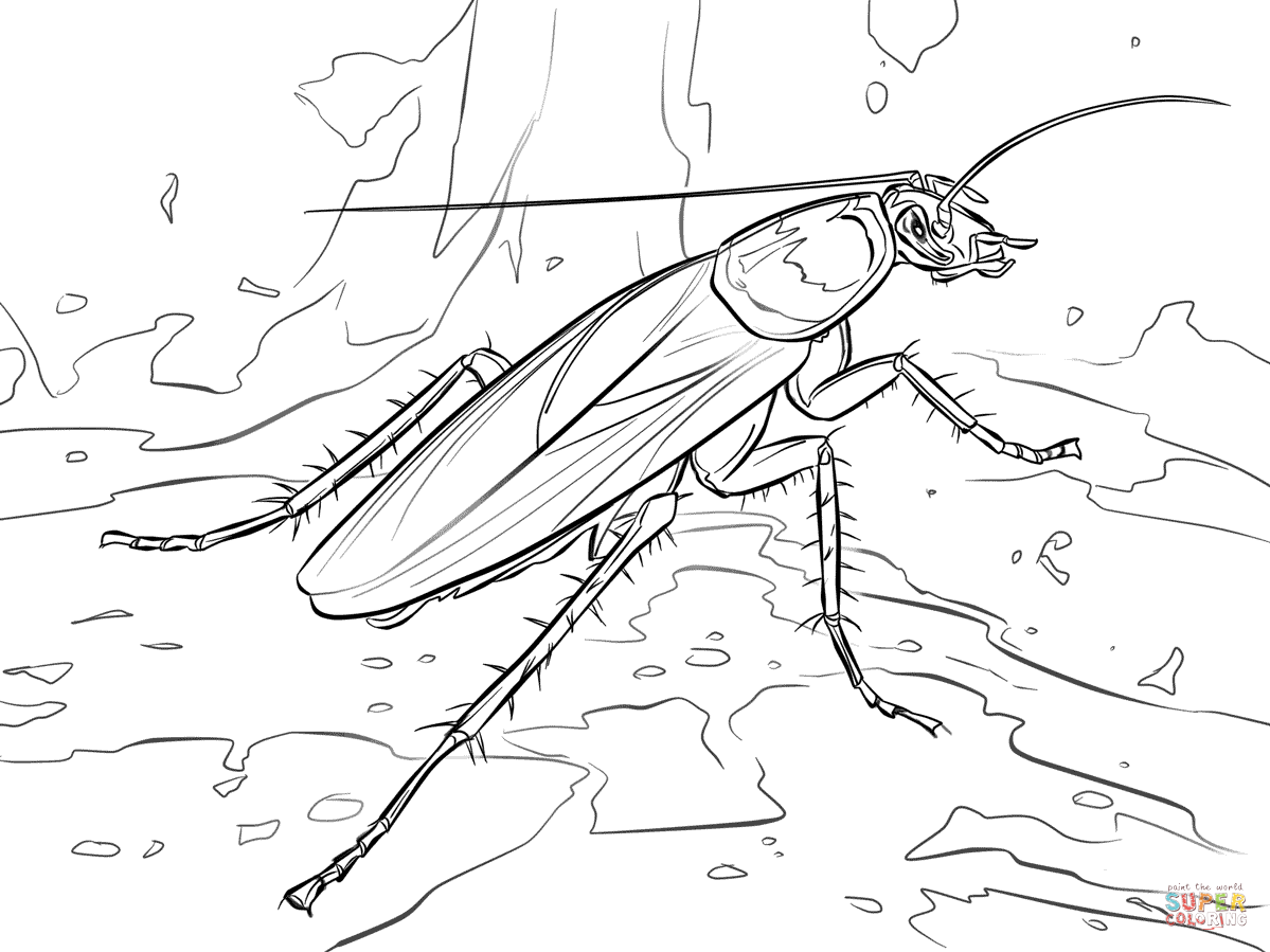 how to draw out a cockroach