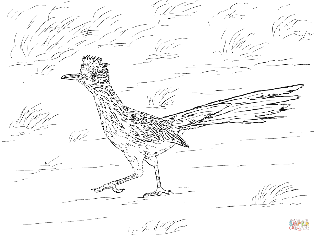 1200x900 Realistic Greater Roadrunner Coloring Page Free Printable