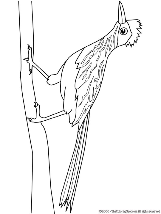 540x720 Roadrunner Coloring Pages 14 Free Coloring Page Site