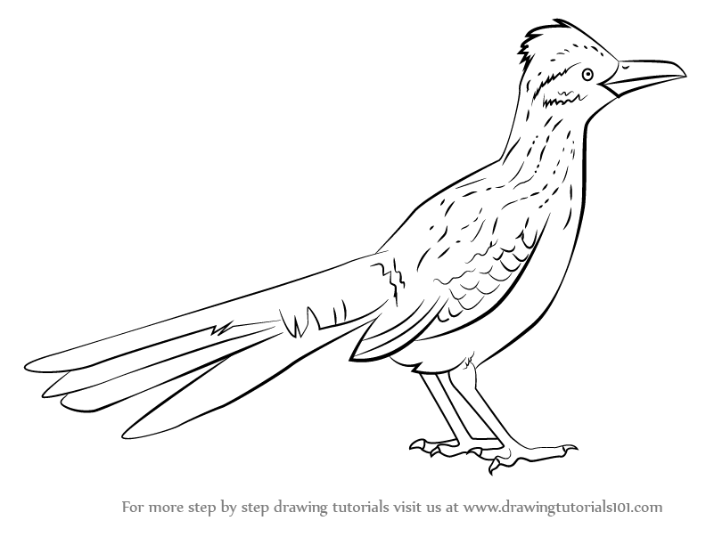 792x612 Learn How To Draw A Greater Roadrunner (Birds) Step By Step