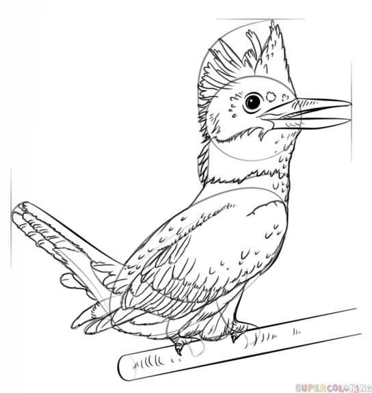 544x575 How To Draw A Kingfisher Step By Step Drawing Tutorials