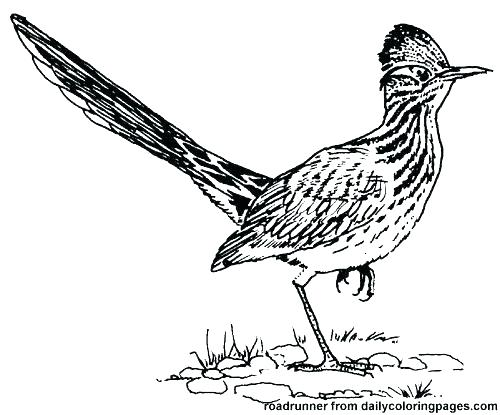 500x415 Road Runner Coloring Page Roadrunner Coloring Page Road Runner
