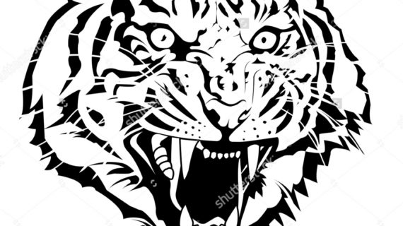 570x320 How To Draw A Tiger Face How To Draw A Roaring Tiger Step Step