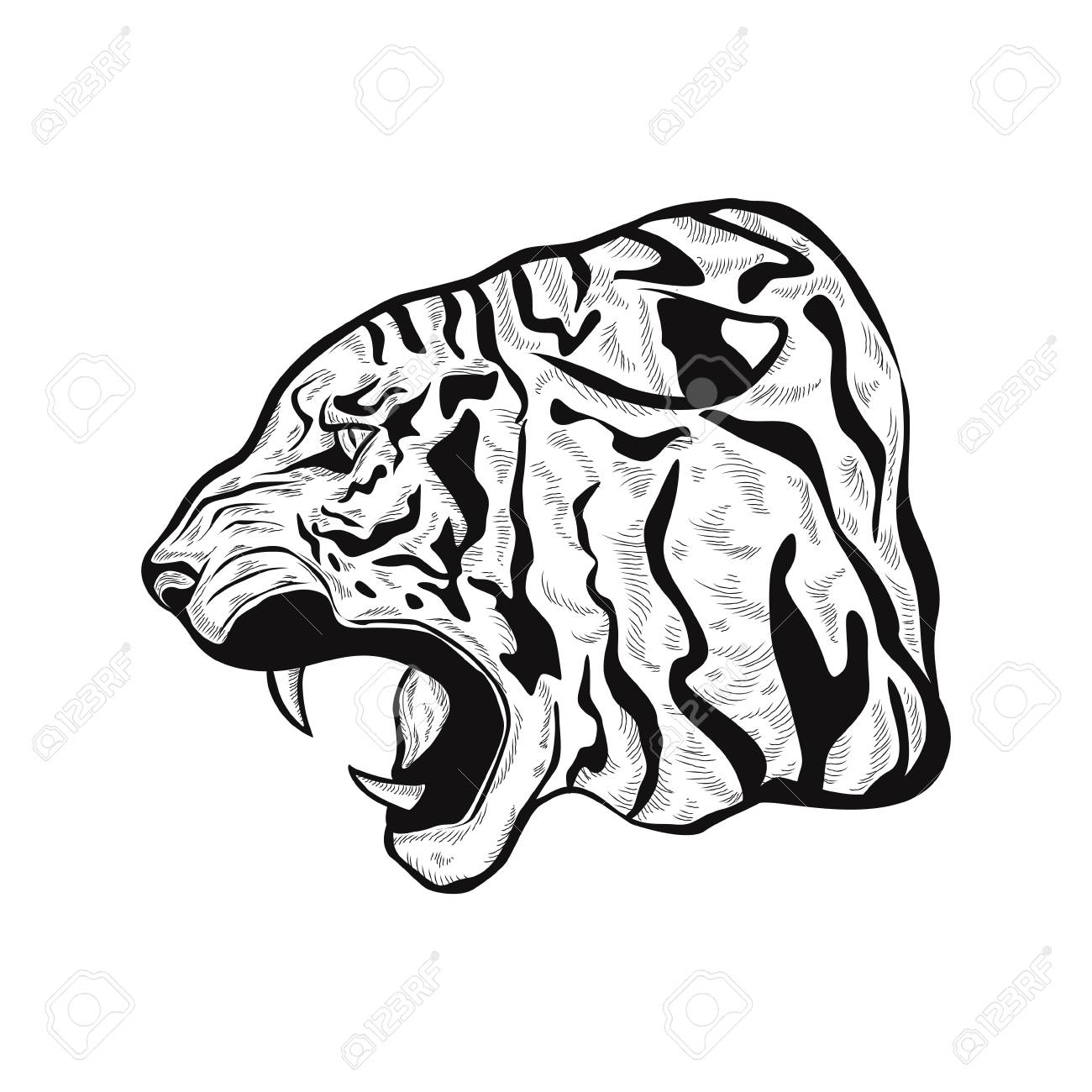 1300x1300 Outline Illustration Of An Anger Tiger Head, Hand Drawn Stylized