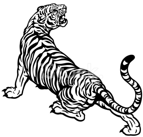 456x439 Roaring Tiger Sketch, In Colour And Black Amp White Stock Vector