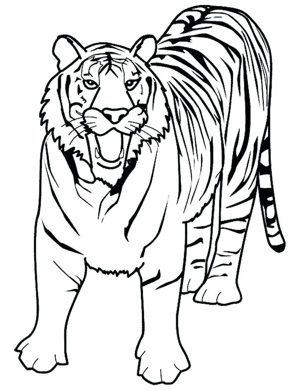 600x786 Tiger Picture To Color A Loud Roaring Of Tiger Coloring Page