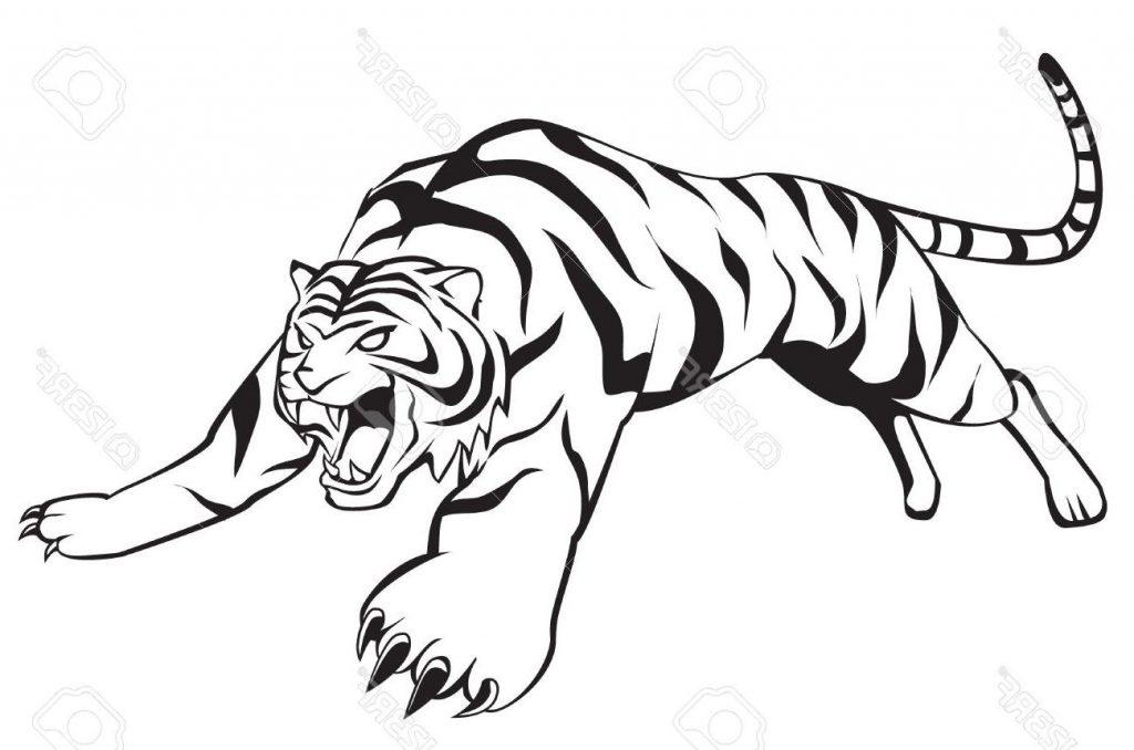 1024x678 Top Tiger Jump Drawing