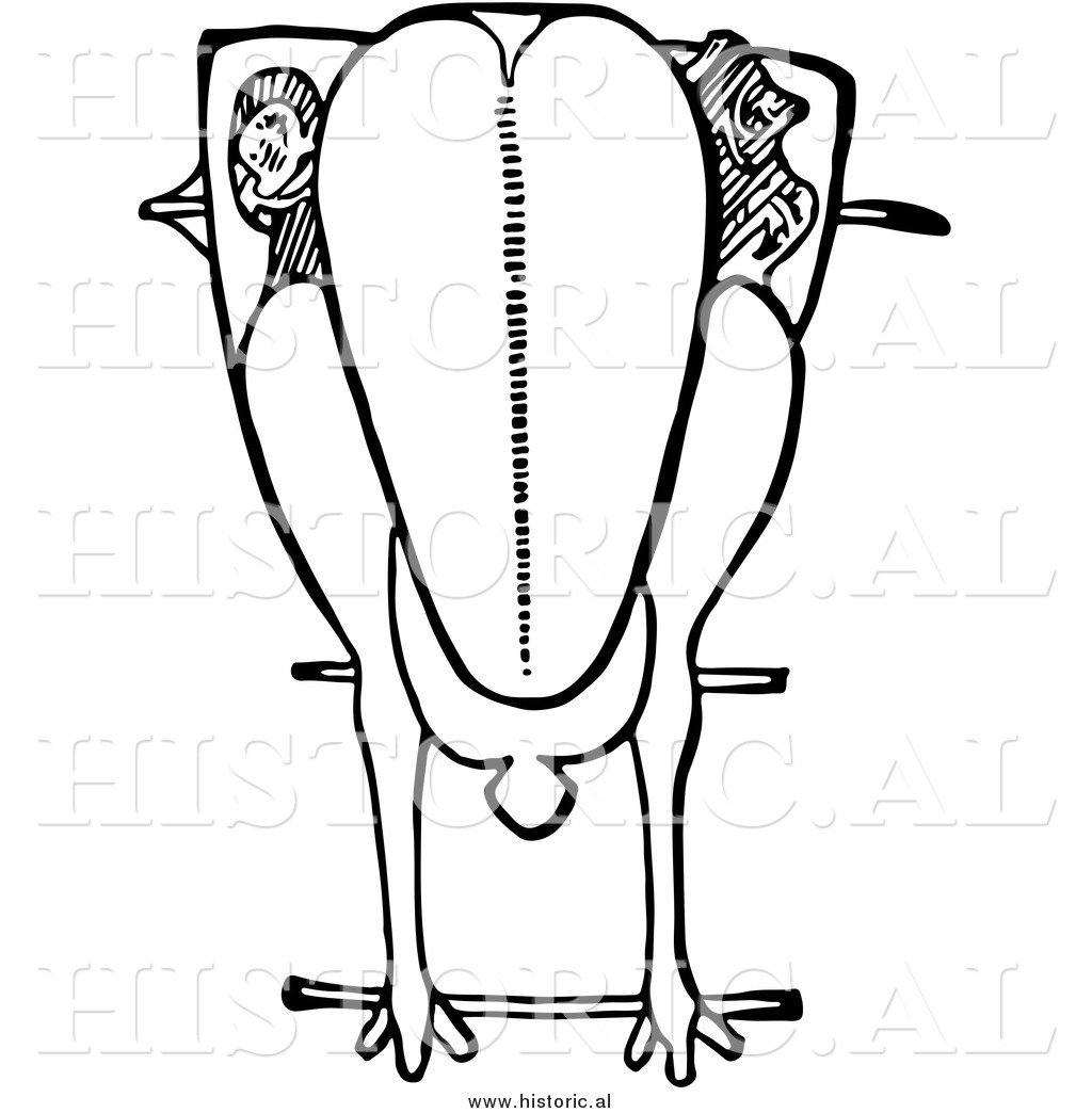 1024x1044 Clipart Of A Trussed Chicken Ready For Roasting