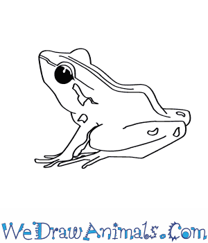 300x350 How To Draw A Bob's Robber Frog