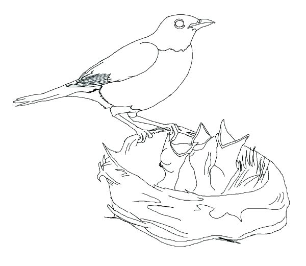 600x521 Robin Bird Coloring Pages Bird Coloring Pages Plus Drawing Robin