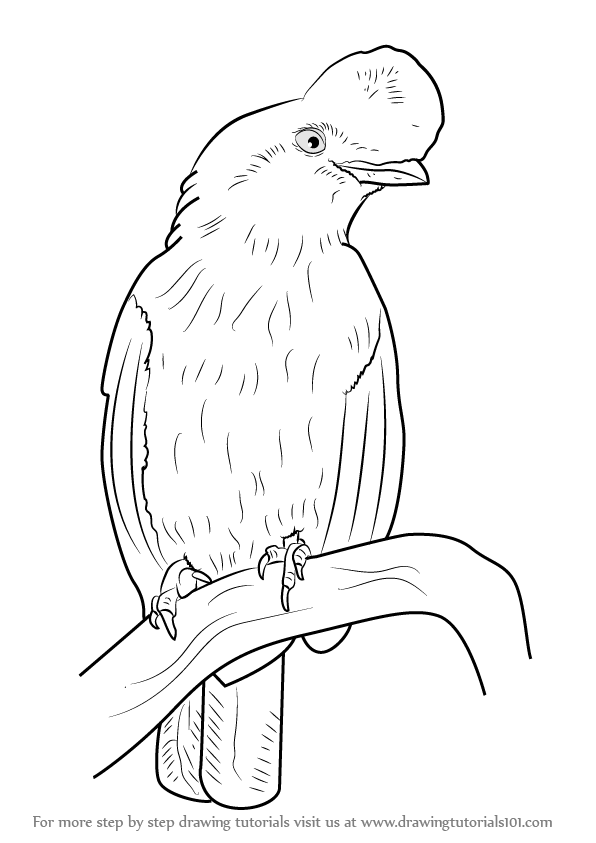 596x843 Learn How To Draw An Andean Cock Of The Rock (Birds) Step By Step